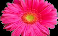 Flower Wallpaper For Android  18 Free Wallpaper