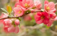 Flower Wallpaper For Iphone  22 Cool Hd Wallpaper