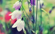 Flower Wallpaper For Iphone 5  9 Widescreen Wallpaper