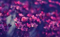 Flower Wallpaper For Iphone  6 High Resolution Wallpaper
