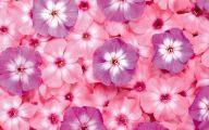 Flower Wallpaper Free  1 Background