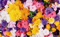 Flower Wallpaper Free  11 Wide Wallpaper