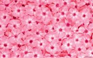 Flower Wallpaper Free  16 Free Wallpaper