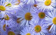 Flower Wallpaper Free  8 Background