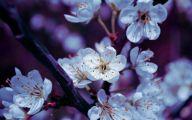 Flower Wallpaper Iphone 6  12 Cool Hd Wallpaper