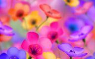 Flower Wallpaper Iphone 6  9 Background Wallpaper
