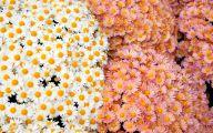 Flower Wallpaper Tumblr  8 Free Wallpaper