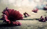 Flower Wallpaper Vintage  29 Hd Wallpaper