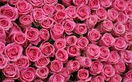 Free Pink Rose Wallpaper  2 Free Wallpaper