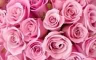 Free Pink Rose Wallpaper  4 Hd Wallpaper