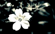 Gray And White Flower Wallpaper  5 Background