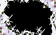 Green Flower Rings Wallpaper Border  17 Background Wallpaper