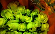 Green Rose  168 Cool Hd Wallpaper
