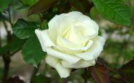Green Rose Bouquets  19 Desktop Wallpaper