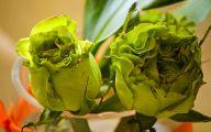 Green Rose Farm  8 Widescreen Wallpaper