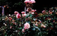 Green Rose Flower Essence  18 Wide Wallpaper