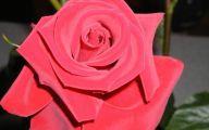 Green Rose Flower Essence  21 Cool Hd Wallpaper