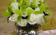 Green Rose Flowers Images  7 Hd Wallpaper