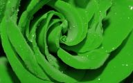 Green Roses Pictures  3 Free Wallpaper