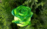 Green Roses Wallpaper  1 Desktop Background