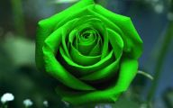 Green Roses Wallpaper  12 Free Wallpaper