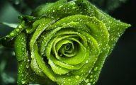 Green Roses Wallpaper  13 Free Hd Wallpaper