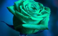 Green Roses Wallpaper  3 Desktop Background