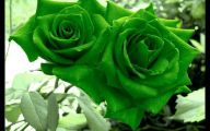 Green Roses Wallpapers  3 Cool Hd Wallpaper