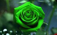Green Roses Wallpapers  5 Cool Wallpaper