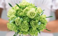 Green Roses Wallpapers  6 Free Hd Wallpaper
