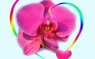 Hot Pink Rose Wallpaper  2 Widescreen Wallpaper