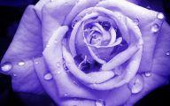 Light Blue Roses Wallpaper  4 High Resolution Wallpaper