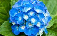 Light Blue Roses Wallpaper  7 Free Hd Wallpaper