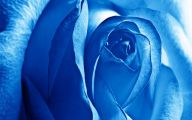 Light Blue Roses Wallpaper  9 Cool Hd Wallpaper