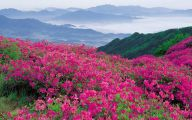 Mountain Flowers 18 Cool Wallpaper