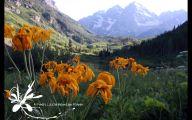 Mountain Flowers 34 High Resolution Wallpaper