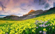 Mountain Flowers 37 Desktop Wallpaper