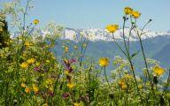 Mountain Flowers 42 Desktop Background