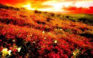 Mountain Flowers 57 Hd Wallpaper