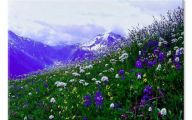 Mountain Flowers 62 Cool Wallpaper