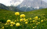 Mountain Flowers 69 Cool Hd Wallpaper
