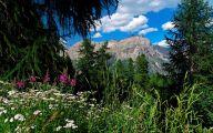 Mountain Flowers 72 Free Wallpaper