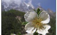 Mountain Flowers 89 High Resolution Wallpaper