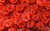 Off White Rose Desktop Wallpaper  18 Wide Wallpaper