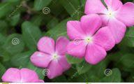 Pink And Green Flower Wallpaper  25 Desktop Background