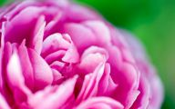 Pink And Green Flower Wallpaper  3 Background Wallpaper