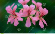 Pink And Green Flower Wallpaper  9 Background
