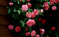 Pink Rose Wallpaper For Desktop  10 Hd Wallpaper