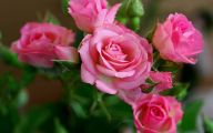 Pink Rose Wallpaper For Desktop  20 Desktop Background
