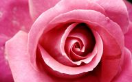 Pink Rose Wallpaper For Desktop  3 Cool Hd Wallpaper
